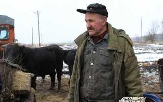 Житель Тулы спас астраханскую корову