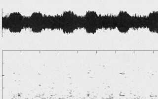 Биологам впервые удалось записать голос японского кита