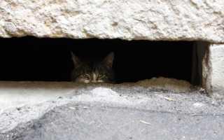 Колпинские активисты оборудуют в подвалах «окошки» для бездомных кошек