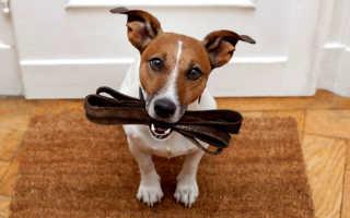 Какой поводок лучше для собаки – мнение эксперта