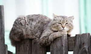 Глазные капли для кошек: обзор препаратов, как и когда применять