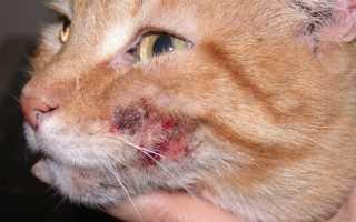 Депрессия у кошек – симптомы, причины, как помочь животному