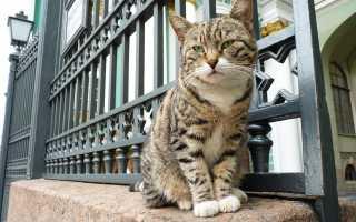 В какой стране кошки носят униформу