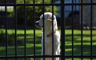 Лучшие охранные породы собак для квартиры