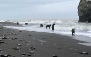 На Сахалине медведь пришёл в цех рыбного завода
