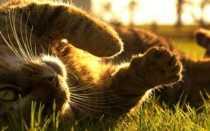 Прател для кошек: инструкция по применению, показания и противопоказания, аналоги, отзывы