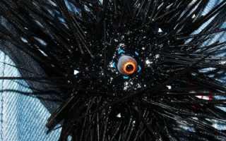 Дайверы засняли огненного морского ежа