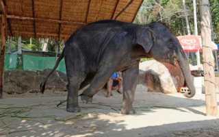 В Индии обезьяна вырвала из рук заклинателя змей кобру