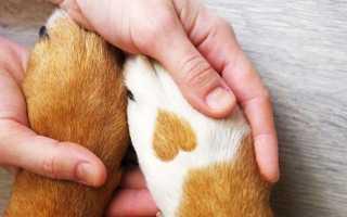 Как приучить собаку мыть лапы после прогулки: лучшие способы