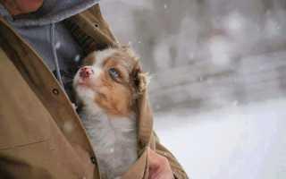 В США волонтёры удивились причине, по которой собаку вернули в приют