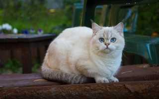 До какого возраста растут кошки и коты: нормальные показатели и отклонения, причины раннего прерывания роста, условия для развития котёнка