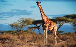 В Великобритании нашли лошадь с расцветкой жирафа