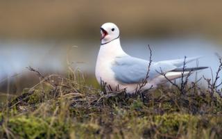 Какие животные обитают в Арктике – список, описание, фото