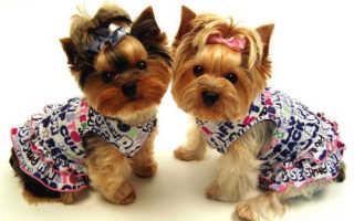 Креатив для четвероногих: в столице прошло дефиле собачьих костюмов