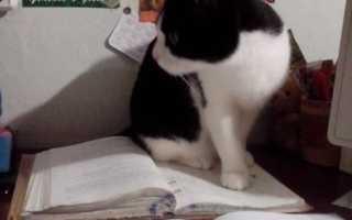 Кот мешает мальчику делать уроки