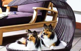 Будка для собаки: требования, виды, техника сооружения