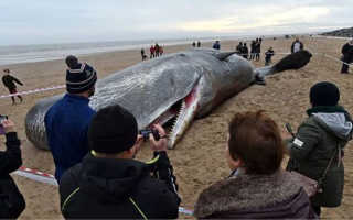 Молодой кит запутался в сетях и погиб от голода