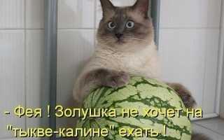 Как и где застревают кошки: забавные фото