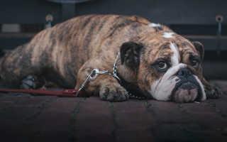 Жители России чаще стали заводить беспородных животных