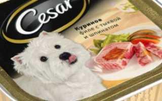 Какая порода собаки в рекламе корма цезарь – фото
