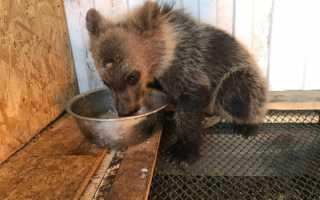 В Уфе во дворе жилого дома обнаружили дикого медвежонка
