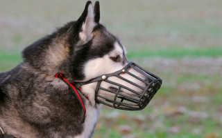 Какой намордник лучше для собаки – мнение эксперта