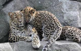 Заповедник «Земля леопарда» опубликовал «селфи» лисиц