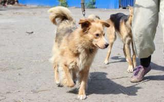 Всех животных Алтайского края занесут в специальную базу данных