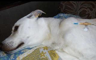 Капельница кошке в холку: как поставить под кожу через катетер дома