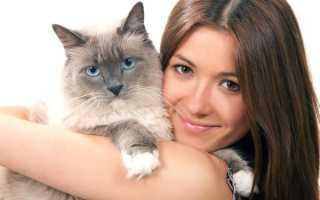 Кошки умеют любить: доказательства на фото