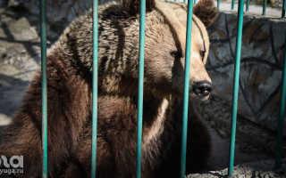 Владельца алтайского зоопарка осудили за попытку контрабанды животными