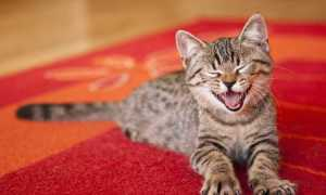 Какой запах отпугивает кошек: ароматы, которые они не любят, борьба с вредными привычками питомца, как отучить животное гадить где попало