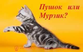 Клички для котов мальчиков: Выбираем популярные и интересные варианты имен
