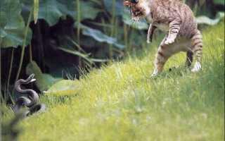 Взятая из приюта кошка спасла хозяина от укуса змеи