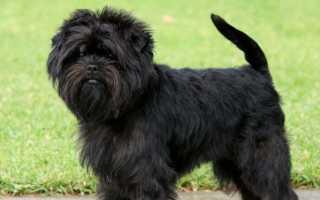 Гипоаллергенные породы собак – топ 10 с фото