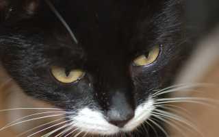 Зачем кошке усы – ответ на волнующий вопрос