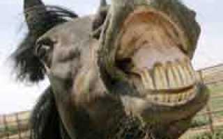 Американца арестовали за езду верхом на лошади в пьяном виде