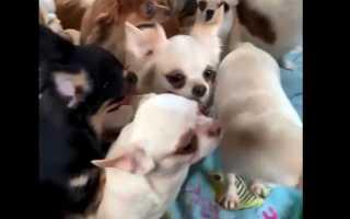 В Одессе после бунта в колонии зоозащитники ищут новых хозяев для местных котов