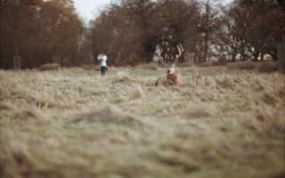 Возбуждённый олень забодал девочку в городском парке Лондона