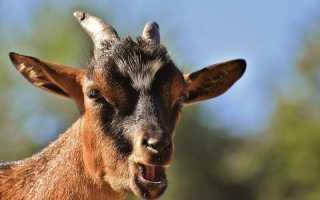 Карантин по бешенству животных объявлен на трёх улицах Тамбова