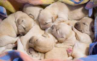 Каких собак лучше разводить для продажи – топ-5 пород с фото