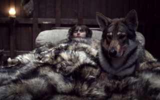 Какая порода собак снималась в игре престолов – фото