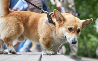 В семи парках Москвы сегодня прошли ветеринарные уроки