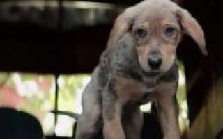 Какая порода собаки в фильме собачья жизнь – фото