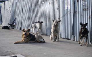 В Никеле бездомных собак дрессируют юные кинологи