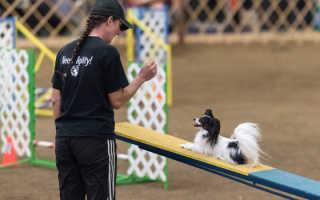 Аджилити для собак: игра, за которую положен приз