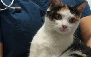 В США котёнок проехал 27 километров под капотом
