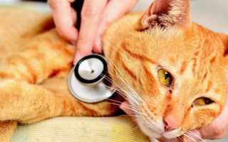 Как сделать коту клизму в домашних условия