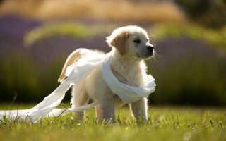 Как приучить собаку к туалету на улице – рекомендации специалистов