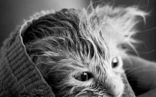 Как помыть кота в домашних условиях – если он боится воды, можно ли обычным шампунем, что делать, если он агрессивный и царапается